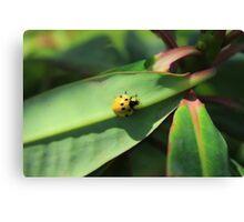 Yellow Ladybug Canvas Print