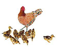 Chicken Duckling Adoption Photographic Print