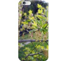 Willow in Spring iPhone Case/Skin