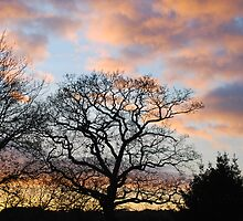 fading light by relayer51