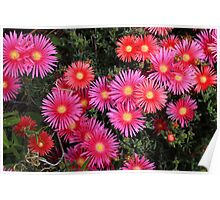 Pink Flowers in a Garden Poster