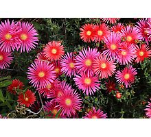 Pink Flowers in a Garden Photographic Print