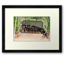 Six Rottweiler Puppies Lined Up On A Swing Framed Print