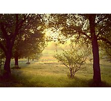 Spring Morning Photographic Print