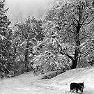 a winter scene by VickiOBrien