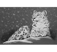 Evening Snow - Snow Leopard Photographic Print