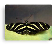 Zebra Longwing (Heliconius charithonia) Canvas Print