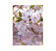 First Spring Blossoms Art Print