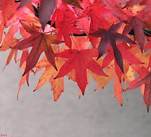 Autum Leaves by RickVink