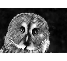 Friend Owl Photographic Print