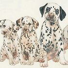 Dalmatian Puppies by BarbBarcikKeith