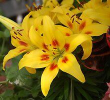 Pretty Flowers by kentuckyblueman