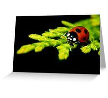 Ladybug ... Greeting Card