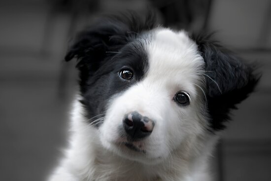fluffy furry puppy by Dan Shalloe