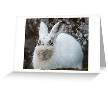 mountain hare Greeting Card