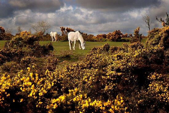 Springtime on Bodmin Moor by Sharon Bishop