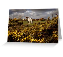 Springtime on Bodmin Moor Greeting Card