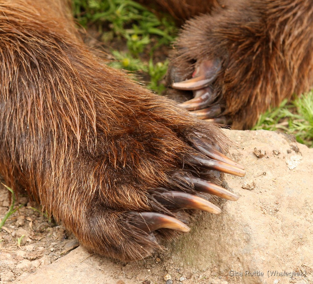 """Cubby Bear Claws"" by Gina Ruttle (Whalegeek)"