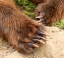 Cubby Bear Claws Photographic Print