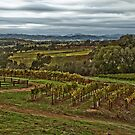 Alexander Valley Vineyards by Fraser Ross