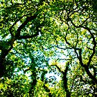 Tree Canopy by Mark Peduzie