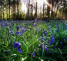 Badbury Hill Bluebells by igotmeacanon