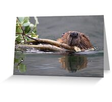 Beaver and Reflection Greeting Card