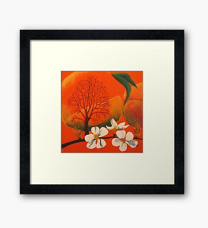 Peach Prelude Framed Print