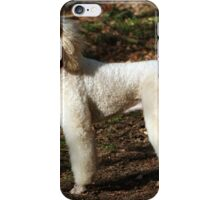 Standard poodle apricot iPhone Case/Skin
