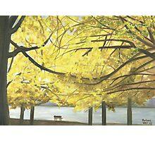 Boston esplanade #3 Photographic Print