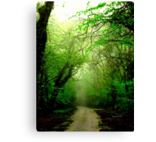 Misty Morning in the Forest Canvas Print