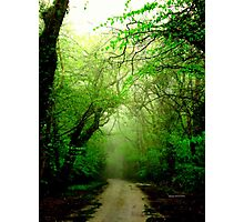 Misty Morning in the Forest Photographic Print
