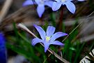 Spring has Sprung... by Larry Llewellyn