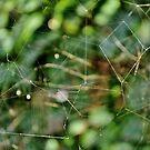Triple storey web by Karen01