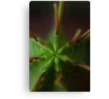 Cactus Spike Canvas Print