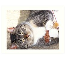 Bootsie Playing With Her Toy Art Print