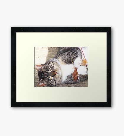 Bootsie Playing With Her Toy Framed Print