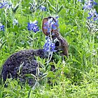 Cottontail N Bluebonnets by Penny Odom