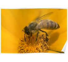 Honey Collector Poster