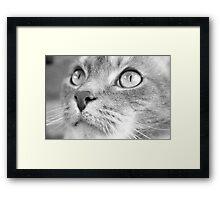 Lulu Framed Print