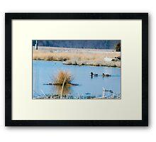 Water Fowl Framed Print
