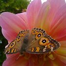 A Moth On A Dahlia by reflector