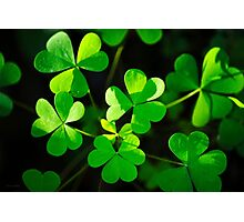 Green Clover Abstract Photographic Print
