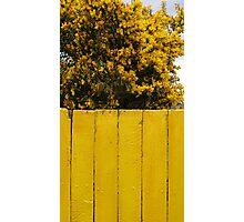 Yellow Chile Photographic Print