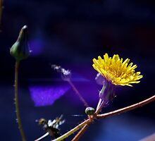 ©NS The Flare And Flower IA. by OmarHernandez