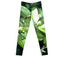 New Greeness Leggings