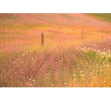 Pastoral Reverie Photographic Print