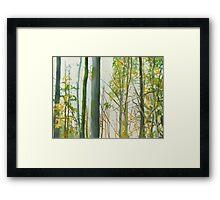 Arborescences Framed Print
