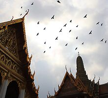 Birds of Bangkok by Carolyn Hawke