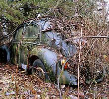 Vintage VW Bug Hiding In The Woods by AlphaEyePhoto
